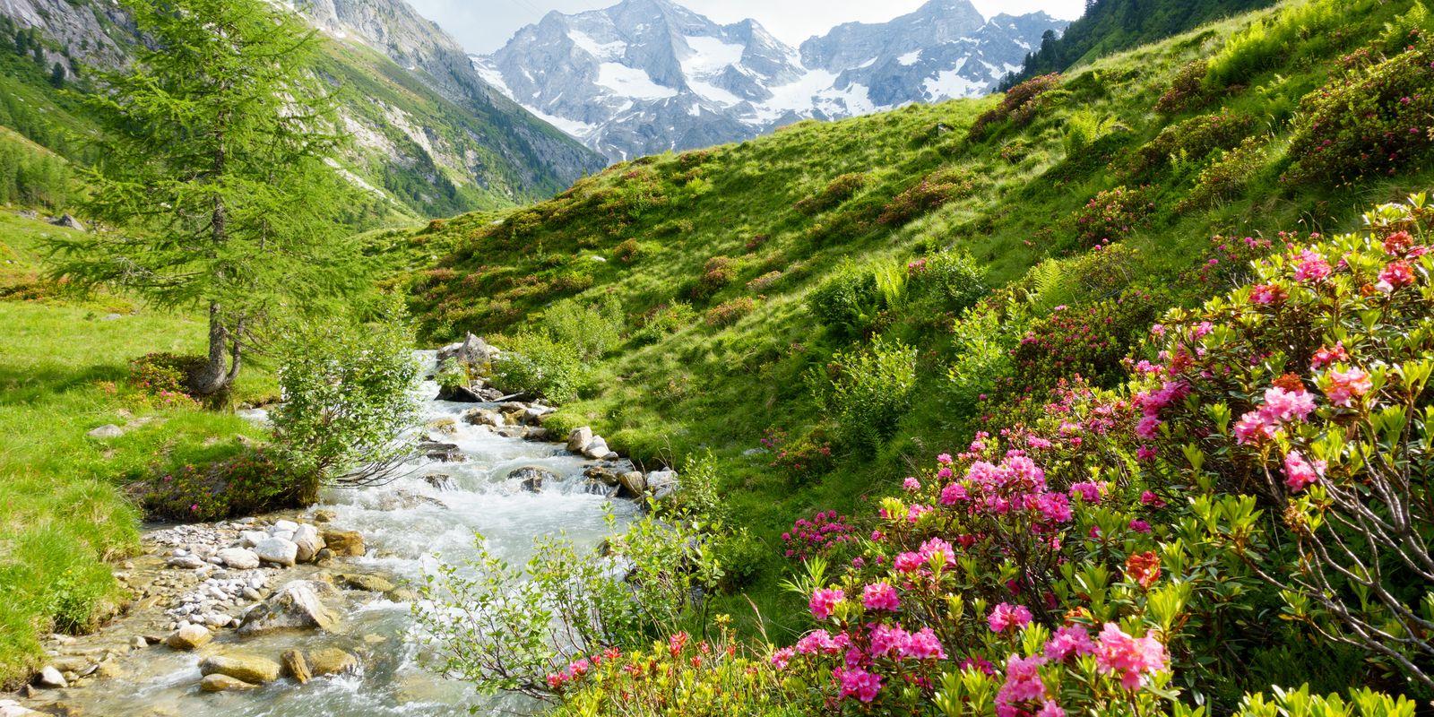 Sommerlandschaft im Zillertal | © Paul Wechselberger / Archiv TVB Mayrhofen